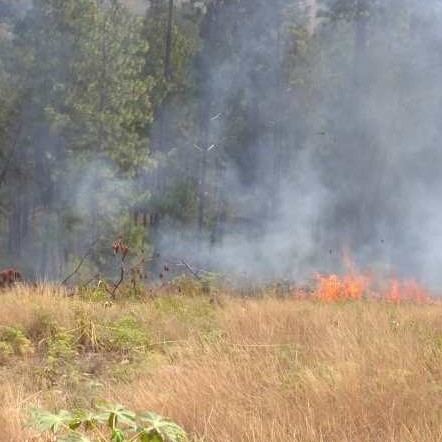 Diario Frontera, Frontera Digital,  INCENDIO, Sucesos, ,Protección Civil Mérida controla incendio forestal en el sector La Calera