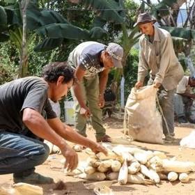 Diario Frontera, Frontera Digital,  BANCO DEL TESORO, Nacionales, ,Cartera agrícola del BT registró un incremento  interanual de 497% entre enero 2019-2020