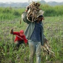 Diario Frontera, Frontera Digital,  FEDEAGRO, Nacionales, ,Fedeagro solicita que se priorice  la distribución de combustible al sector agrícola