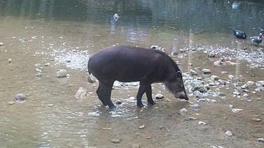 http://www.fronteradigital.com.ve/Autoridades investigan muerte de un animal dentro del zoológico de Los Chorros