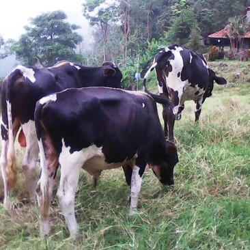 Diario Frontera, Frontera Digital,  IMDERURAL, PRODUCTORES DE LECHE, Regionales, ,Imderural firmó convenio con productores de leche para asistencia técnica