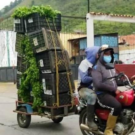 Diario Frontera, Frontera Digital,  PRODUCTORES SIN COMBUSTIBLE, Páramo, ,En «Mototritones» cargan cosechas de verduras y hortalizas en el páramo merideño