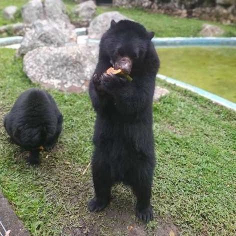 Diario Frontera, Frontera Digital,  PARQUE CHORROS DE MILLA, Entretenimiento, ,Parque Zoológico Chorros de Milla  se consolida como ícono del turismo merideño